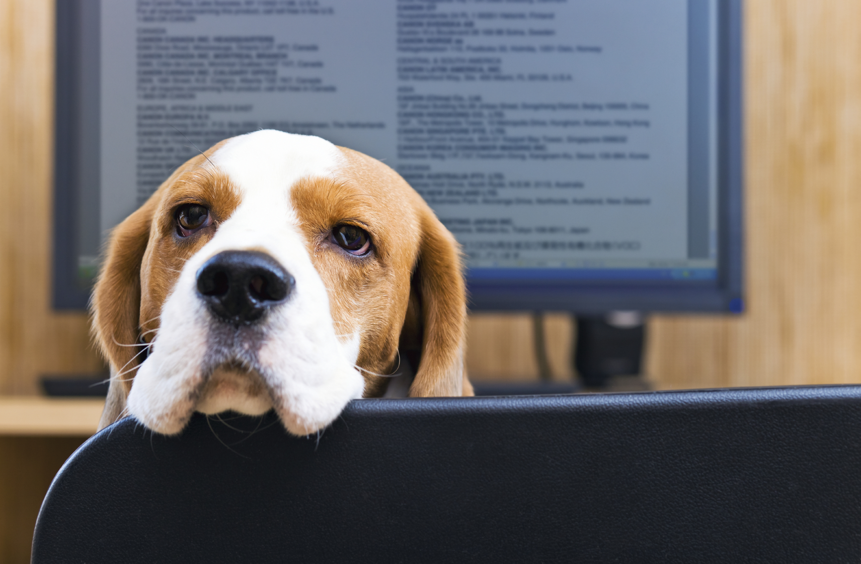 Do dogs at work actually improve employee engagement?
